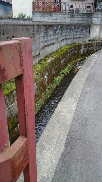 20141015 城山 雨降 大戸 相原DSC_0119.jpg